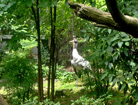 Crane in Central Park Zoo, New York City